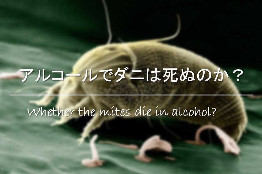 【アルコールでダニは死ぬのか?】市販の消毒液で死滅する!?駆除方法を紹介!