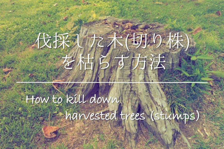 【伐採した木(切り株)を枯らす方法】簡単!!おすすめのやり方を紹介