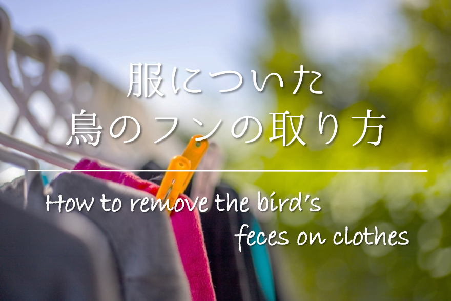 【服についた鳥のフンの取り方】簡単!!応急処置から洗濯方法まで徹底解説!