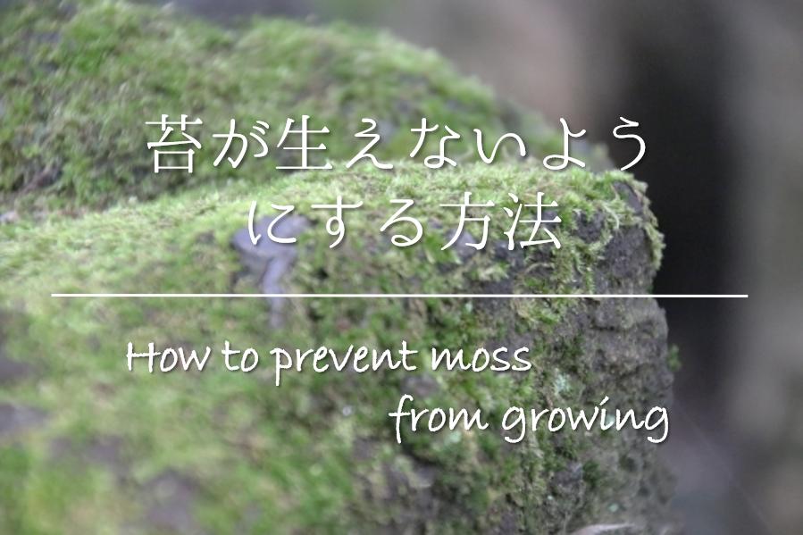 【苔が生えないようにする方法】庭の苔対策はこれで決まり!おすすめの方法を紹介