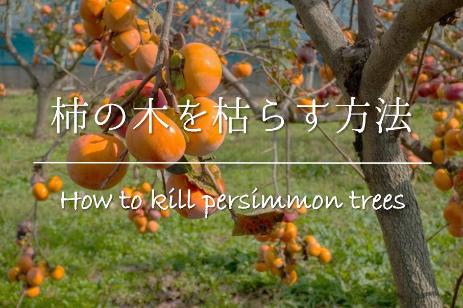 【柿の木を枯らす方法】木を切らずに枯らしたい!!おすすめの方法を紹介!