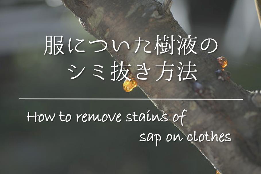 【服についた樹液のシミ抜き方法】簡単‼おすすめの落とし方を紹介!
