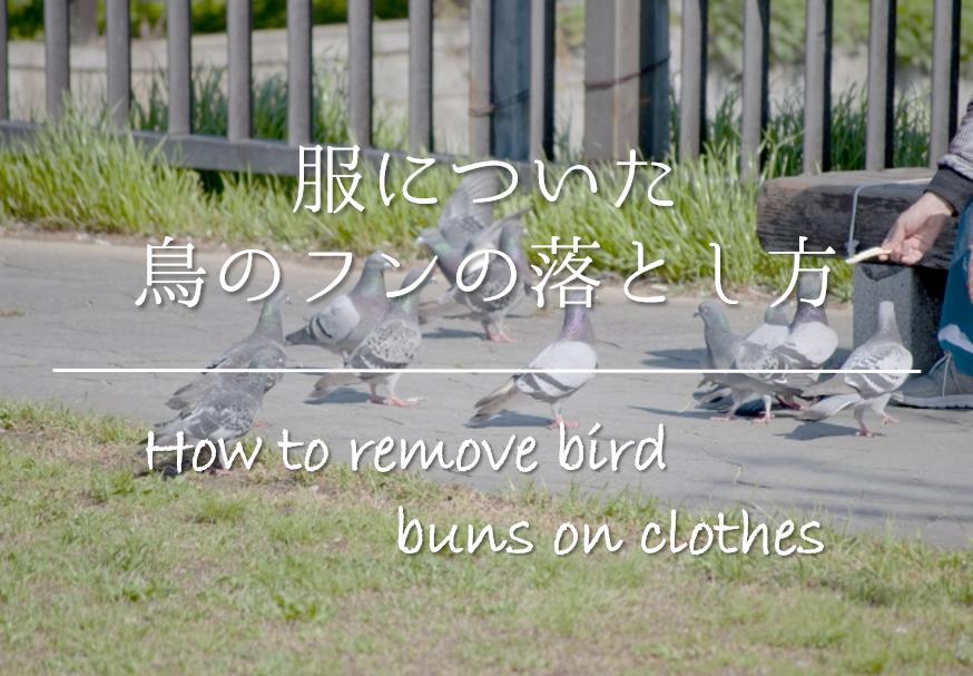 【服についた鳥のフンの取り方】超簡単!!おすすめの染み抜き方法&注意点を紹介!