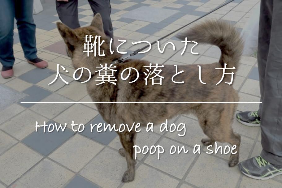 【靴についた犬の糞の落とし方】簡単!!正しい洗い方&臭いの取り方を紹介!